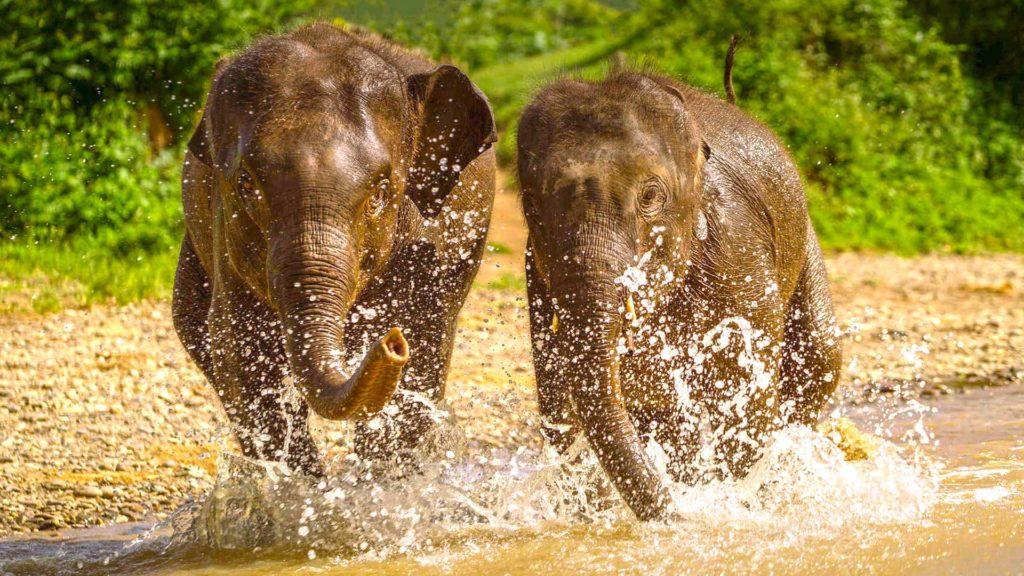 Sanctuary of elephants