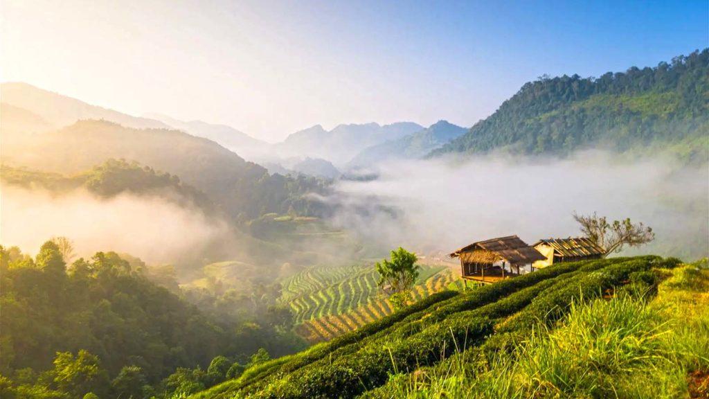 ChiangMai17